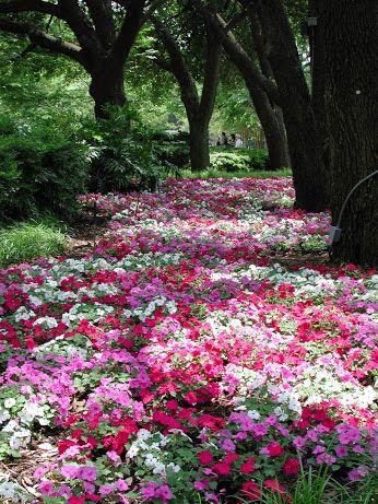 !!!La belleza en flor !!! - Comunidade - Google+