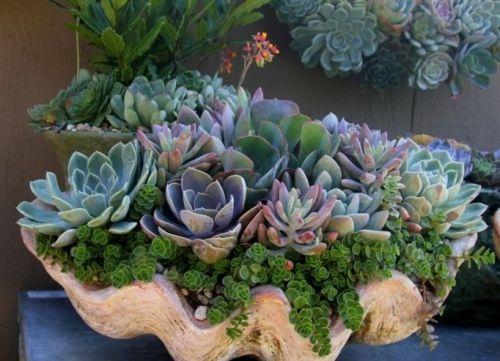 Plantes Succulentes Idees D Arrangement Jardin Exterieur