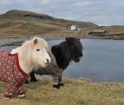 ponies shetland in cardigans - Buscar con Google