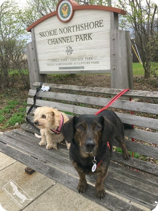 A Great List Of Dog Walks Near Chicago From Dolly The Dachshund Dog List Pet Friendly Vacations Find Pets