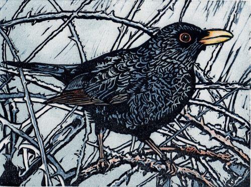 Blackbird. Linocut, 20 x 15cms. 9 of 20 remaining, £30 unframed