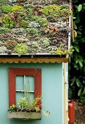 Love the succulent roof cover on this garden shed!