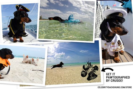 "Now available for ONE week only - get a print of ANY of my recent Bahamas Sailing photos, with the optional custom note & ""pawtograph"" by Crusoe!  Get yours here: http://celebda.ch/sailing-photo-prints"