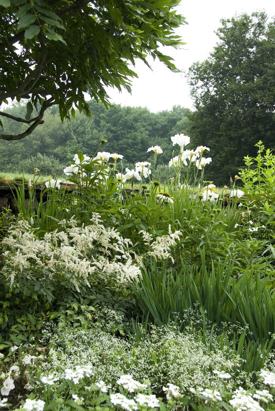~Iris ensata 'Great White Heron', Astilbe, Euphorbia 'Diamond Frost', Echinacea 'White Swan', Verbena Tukana White: