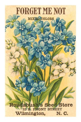 vintage flower seed packges | Forget Me Not Seed Packet Posters at AllPosters.com
