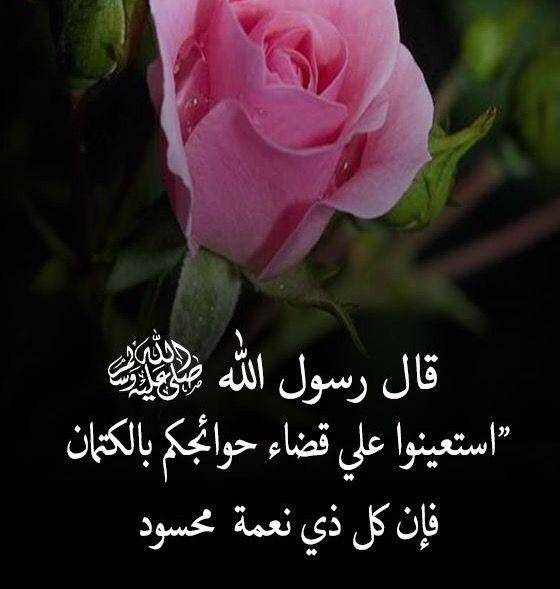 Pin By Ali On قطوف دعويه Flowers Plants Rose