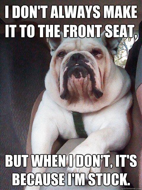 Funny Bulldog The Funniest Bulldog Videos And Memes Funny Dog