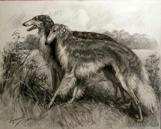 Black and white print of borzoi dogs.
