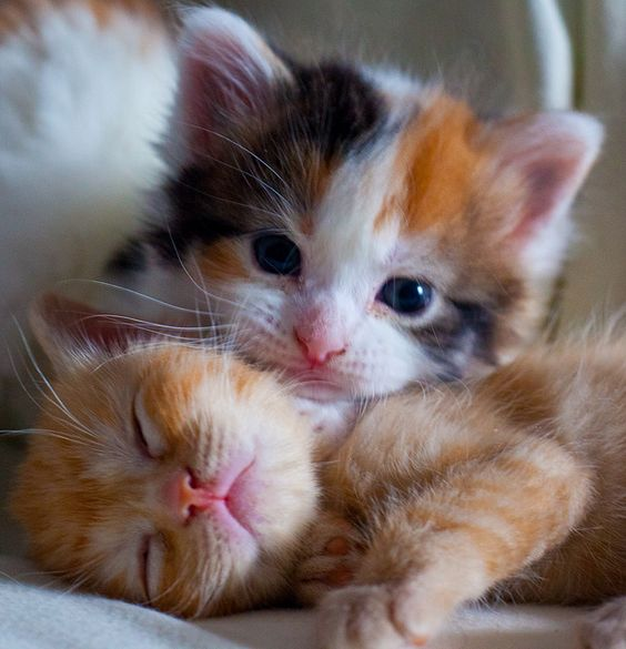 Daisy & Patches #kitty kitten cat cats cute aww omg: