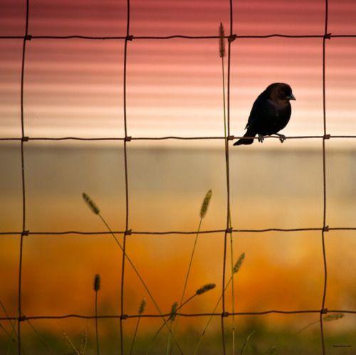 #pájaro al atardecer: