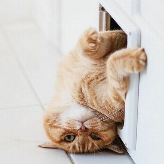 cats, funny, personality