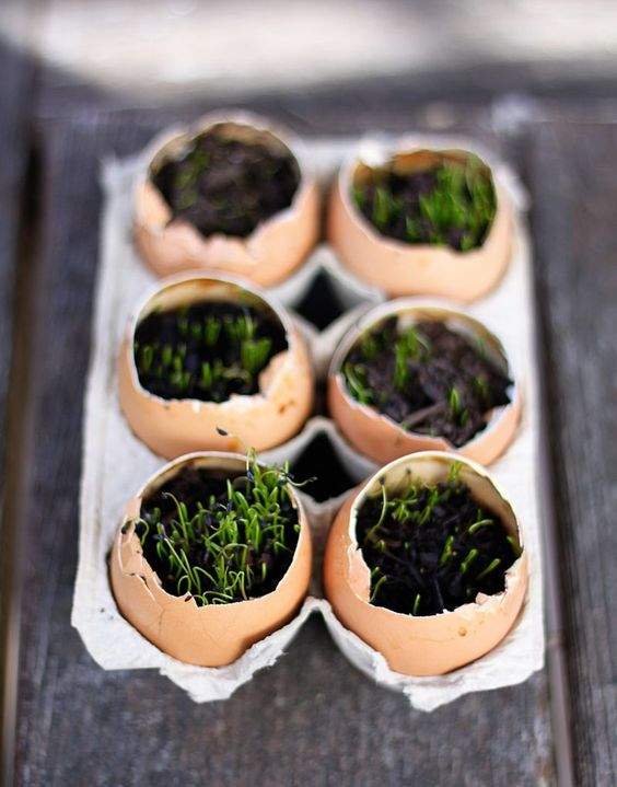 Start seeds in egg shells, which will give nutrients to your seedlings.  Then they can be slightly crushed and planted outside in the spring.  Great idea!: Garden Ideas, Eggshell Seedlings, Eggshell Planters, Chive Eggs, Gardening Ideas, Eggshell Succulents, Egg Eggshell