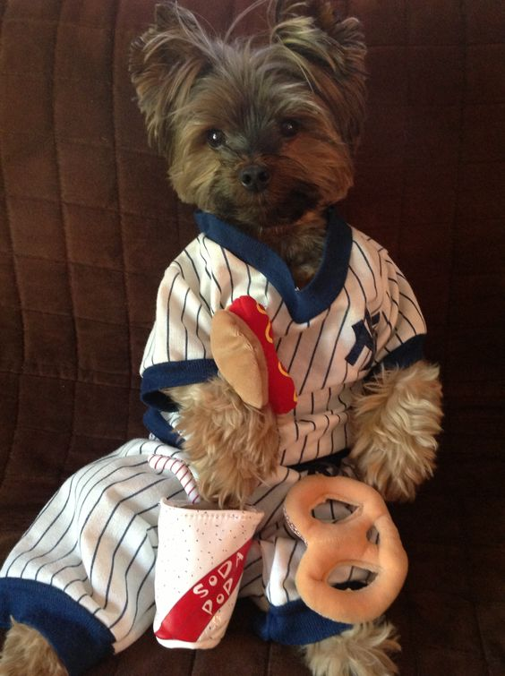 Baxter loves his Yankees too!