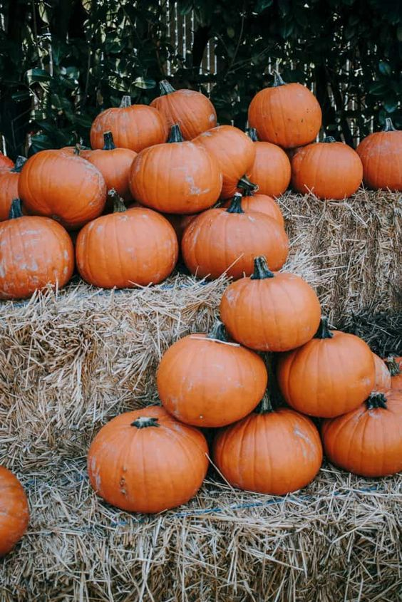 The Prettiest Pumpkin Patch You Ever Saw - Decor Hint