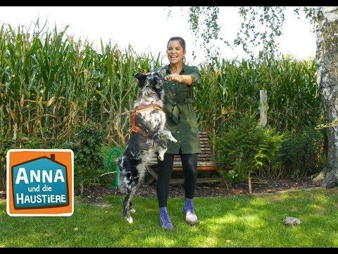 Australian Shepherd Information Fur Kinder Anna Und Die Haustiere Youtube In 2020 Haustiere Wilde Tiere Tiere