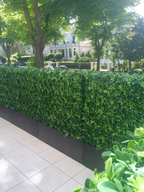 Kunsthecke Buchs Wetterfest Von Bellaplanta Sichtschutz Uv Bestandig Innovative Terrassengestaltung Massanfertigung Indiv Kunstpflanzen Pflanzen Garten