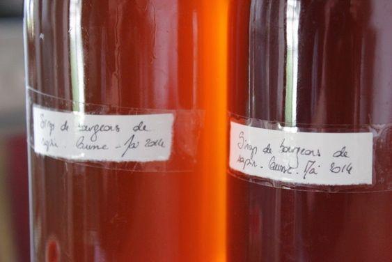 La recette du sirop de bourgeons de sapin/d'épicéa