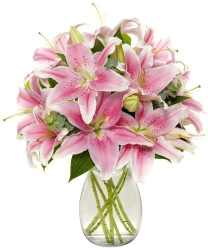 8 Stem Starfighter Stargazer Lily Bunch - With Vase : Fresh Cut Format Lily Flowers: