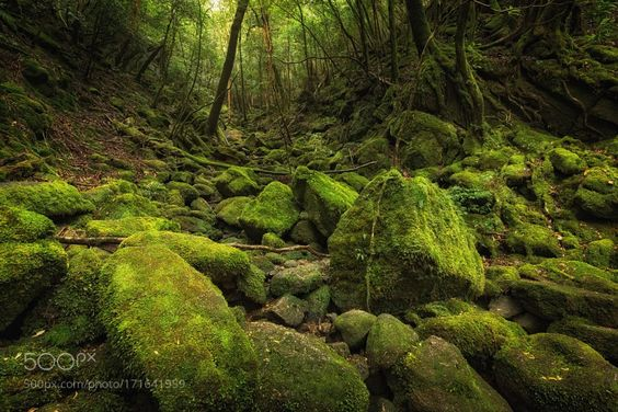 #photography Green Forest in Japan by WojciechToman https://t.co/6k644dADAO #followme #photography