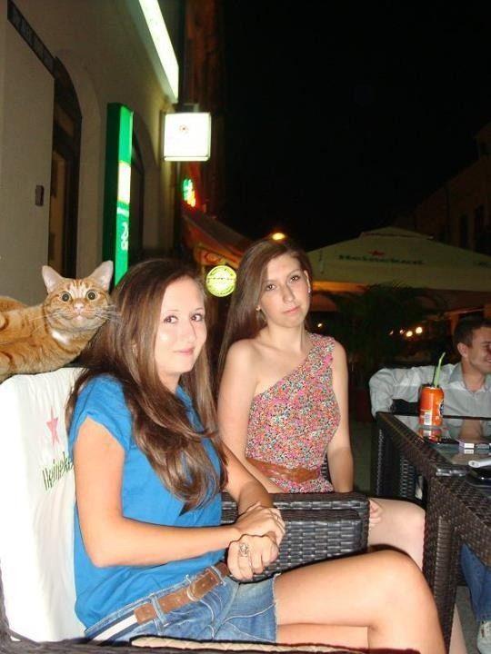 Photobombing cat... me in cat form. :):