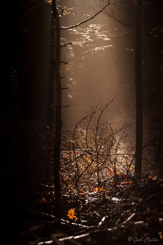 """ Between Dark and Brightness / Gaël Martin Somewhere in the Forest, France """