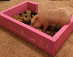 DIY Pig Rooting Box - Made ours today. A little different but same general idea