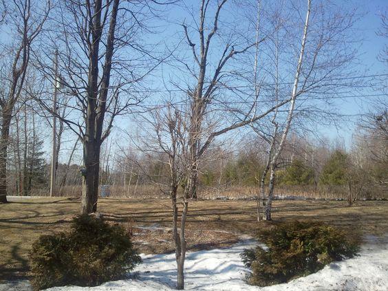 moins d'un mois plus tard après une tempête de neige, 21 mars 2012