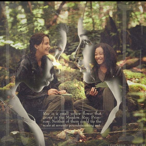 rue and katniss relationship in the book