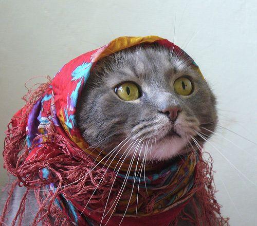 classic.: Kitty Cats, Cat Babushka, Babushka Kitty, Animals Cats Dogs, Babushkacat, Cute Animals, Babushka Cat, Head Scarf