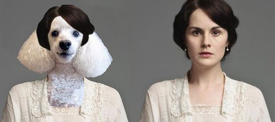 Downton Abbey Characters & their Canine Counterparts | Lady Mary Crawley: Poodle | via Dogster.com: Dogs Poodle, Abbey Dogs, Downton Dogs, Downton Abbey Characters, Cats And Dogs, Dogster Lady, Downton Abbey Cast, Dogs Lady
