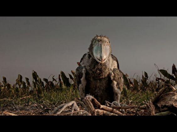 I love this creature!