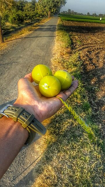Daily juices: Amla Fruit (snapchat effect!)