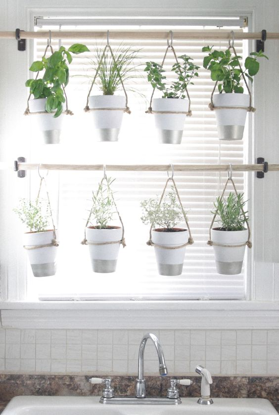 Hanging plants in a window