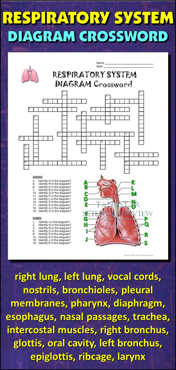 Respiratory System  Activities And Assessment On Pinterest