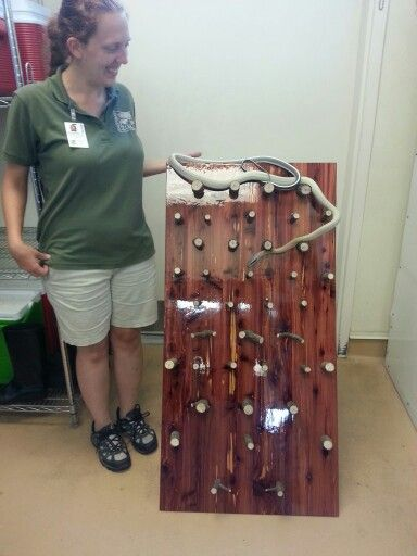This is TOO cool. Our snakes would love this and such a great tool to show off their climbing ability, muscular skills.