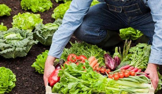 España sigue siendo el primer país en superficie de cultivos ecológicos en UE