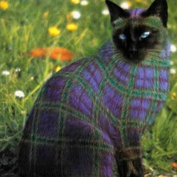 """Several different images, seen all over: """"Painted cats: Some of the paint jobs cost $15,000 and had to be repeated every 3 months as the cat's hair grows out. Must be nice to have $60,000 a year just to keep your cat  painted!!""""    Some pinners are in on the joke: They're gorgeously photoshopped from the satirical book WHY PAINT CATS -- Snopes has a good historical view: http://www.snopes.com/photos/arts/paintedcats.asp"""