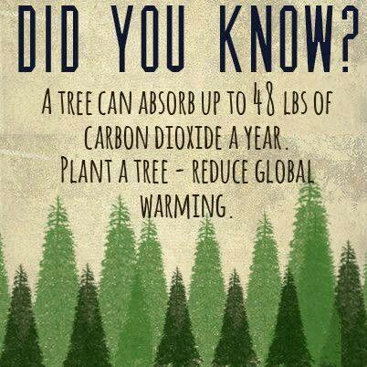 A tree can absorb up to 48 lbs of CO2 a year