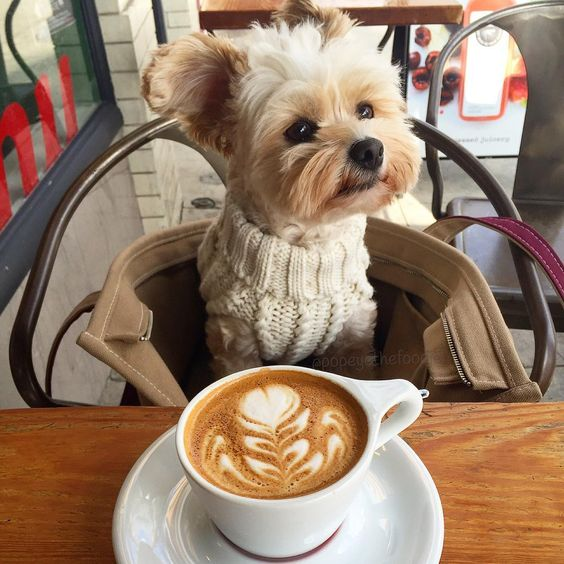 Cooler weather calls for sweaters and cappuccinos - @intelligentsiacoffee in Pasadena. #popeyethefoodie .