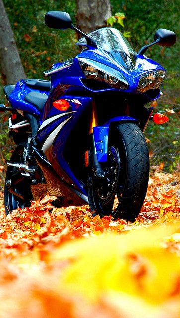 Got to that point in my life where the colour of the leaves are more striking than another R1 or whatever it is...