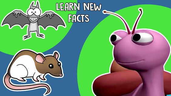 Interesting Facts About Animals   Learn New Facts   KidsVideoShow