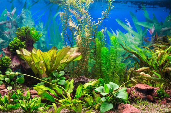 explore pet aquarium aquarium stuff and more aquarium plants facts ...