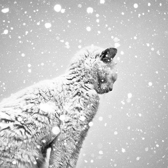 17 superbes photographies noir et blanc de Benoit Courti