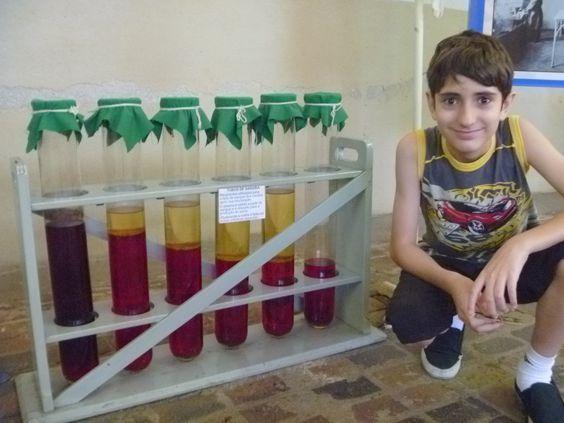 tubos demonstrando a separação do sangue para extração do soro.