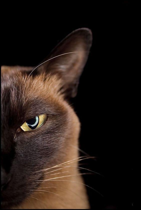 Os gatos enxergam nossas almas, por isso sabem como nos olhar do jeito certo #gatos #olhar #lindo: