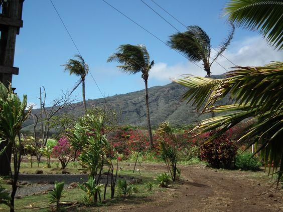 Swaying Palmtrees