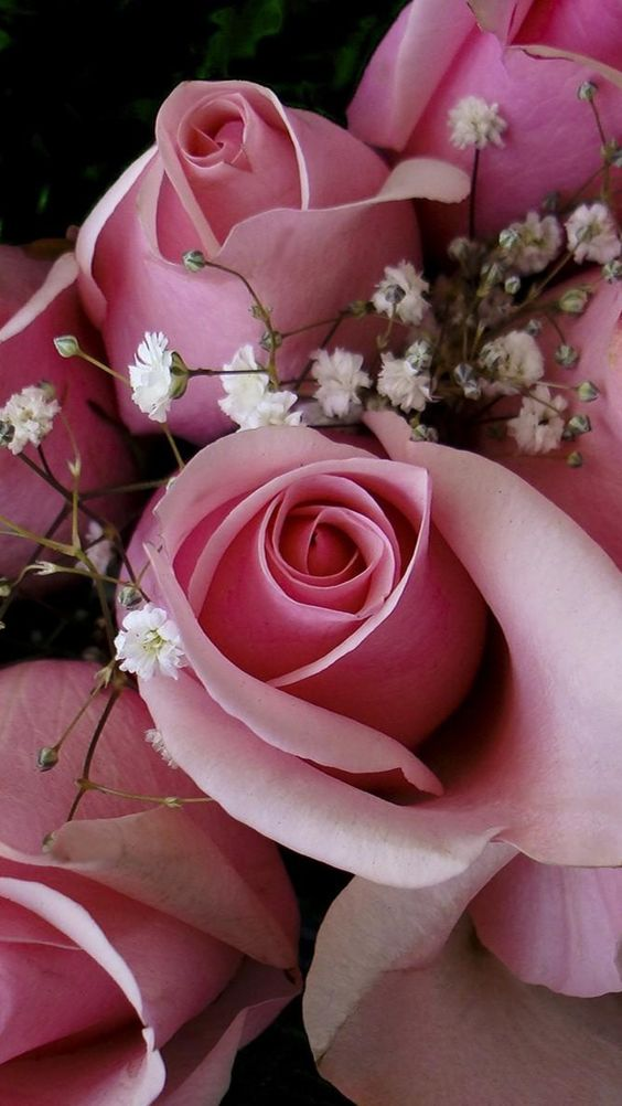 roses, flowers, pink, gypsophila, bouquet, buds