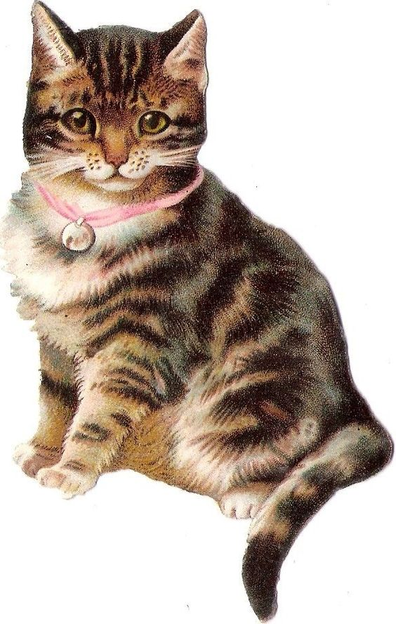 Oblaten Glanzbild scrap die cut chromo Katze 11cm  cat tiger kitten Halsband:
