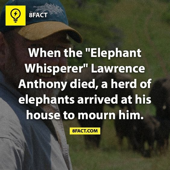 """Lawrence Anthony (1950-2012) was an international conservationist, environmentalist, explorer, and bestselling author.  """"There is more to life than just yourself, your own family, and your own kind.""""  >>Get our daily newsletter here: http://8fact.com/"""