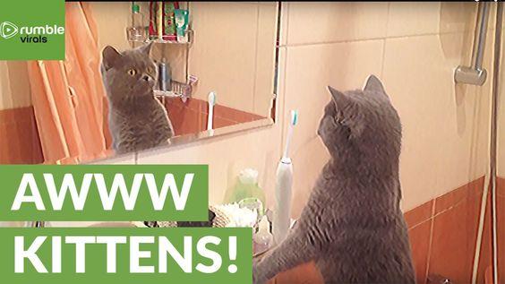 Cat admires himself in the mirror